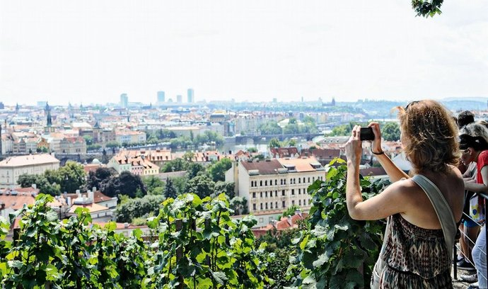 vinice Pražský hrad