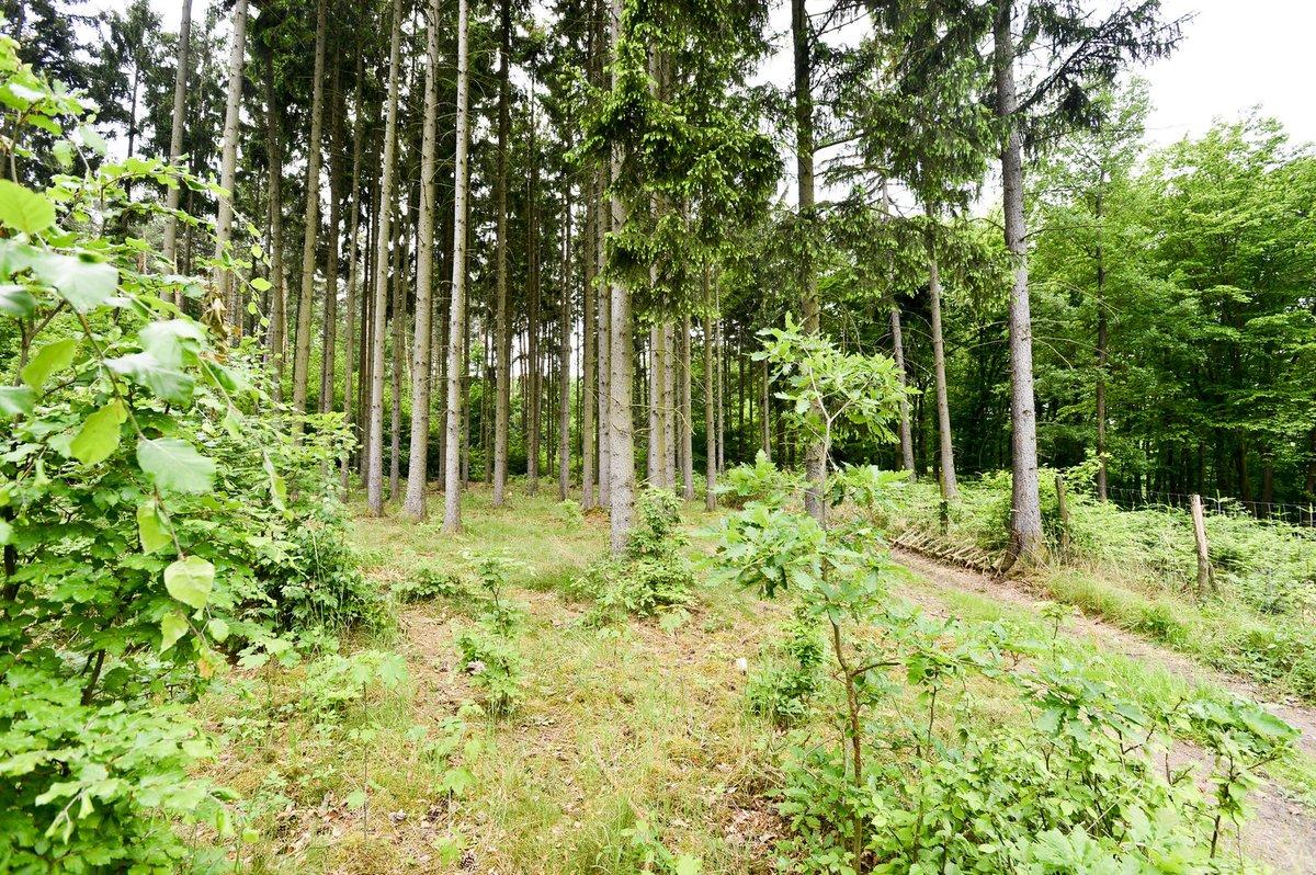 Dívku znásilnil muž v lese u Vonoklas.