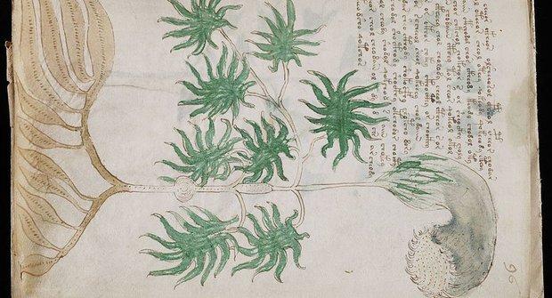 Přečtěte si Voynichův rukopis online!