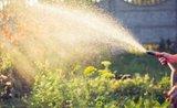 Zelenou zahradu můžete mít i v parném létě. 5 tipů, jak ji nejlépe zavlažovat