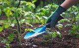 Jarné hnojenie záhrady: pozor na čerstvý hnoj, zničil by vám úrodu