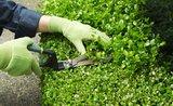 Jaké zahradnické náčiní vám ušetří práci na zahradě?