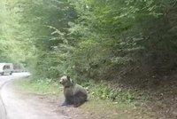 Turista (72) v Tatrách chtěl mít fotku s medvědem: Šelma se mu zakousla do nohy