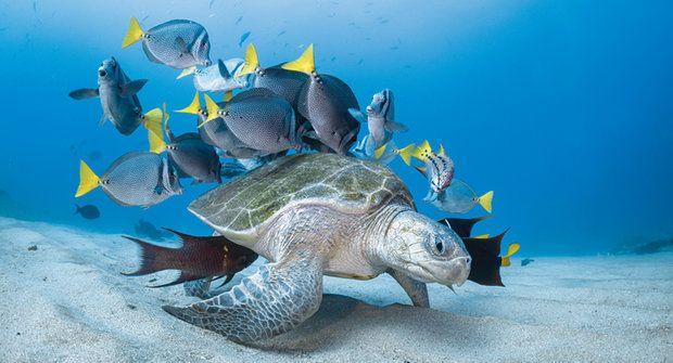 Mořská želva jako dopravní prostředek nebo mísa s lahůdkami?