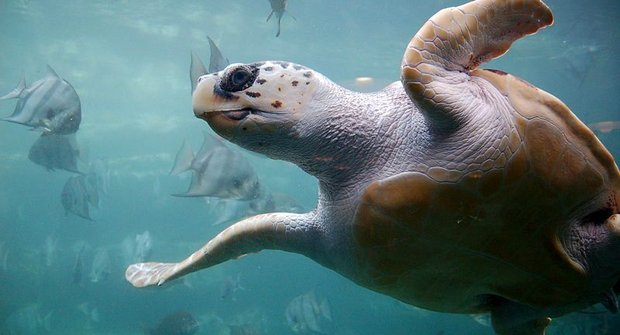 Tuláci moří: Na co pevnina? Celý život v oceánu!