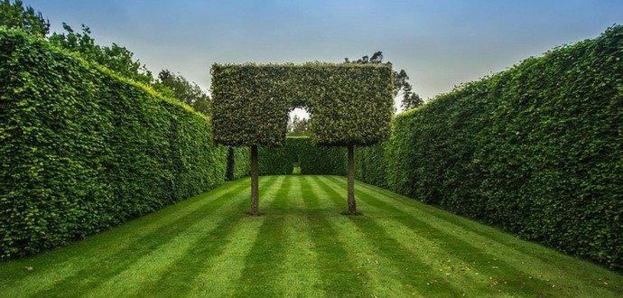 Zkroťte svůj živý plot