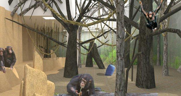 Takto bude vypadat nový interiér brněnské zoologické zahrady u šimpanzů.