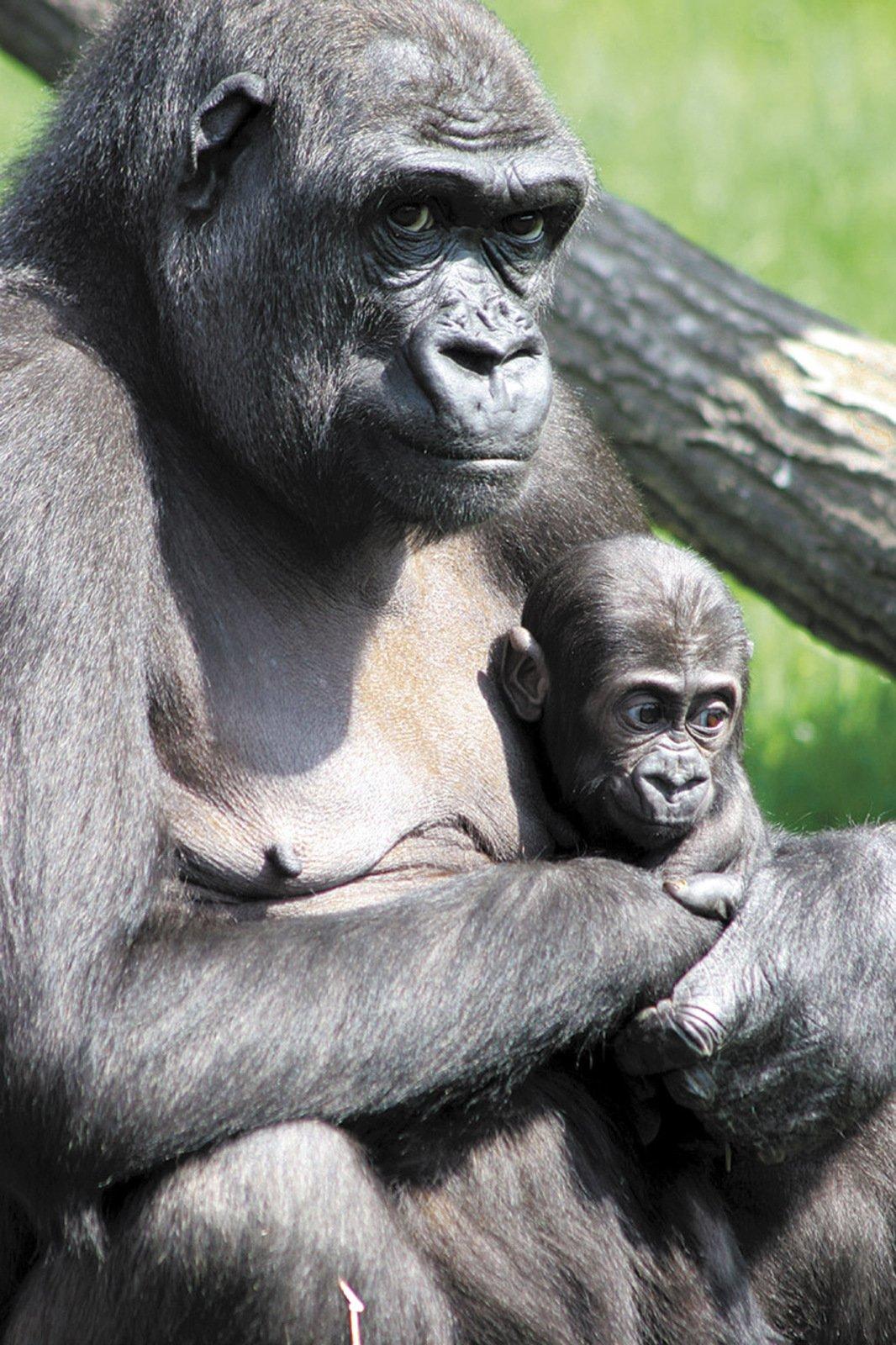 Moja, ještě jako miminko, s matkou Kijivou.