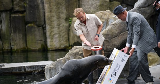 The symbolic male of the South African sea lion Meloun christened the board game In the Footsteps of the Prague Zoo.