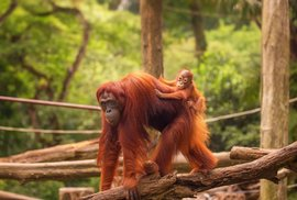 TOP 10: Nejznámější světové zoo