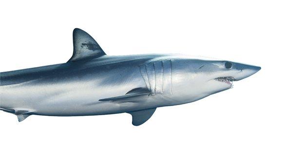 Dokonalý stroj na smrt: Žralok je největší a nejstrašnější