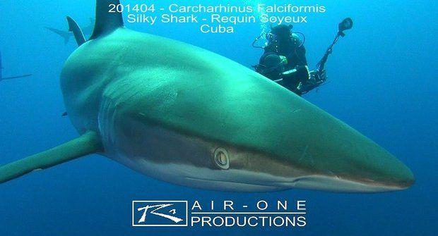 Žraloci z hedvábí mají hladkou kůži