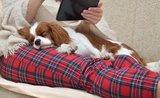 Nenoste srsť: odstráňte zvieracie chlpy z oblečenia ľahko a rýchlo