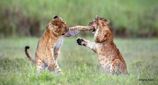 Fotky zvířat, které vám zvednou náladu