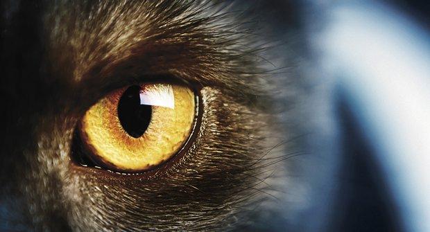 Tajemná zvířata z internetu: Hrozně bychom si přáli, aby fakt existovala!