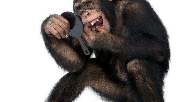 Nejchytřejší zvířata: Kdo se pozná v zrcadle