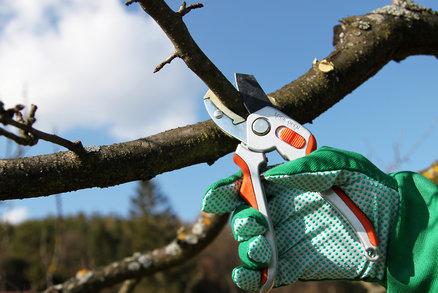 Jaro se blíží: Zahrádkáři! Nezapomeňte na prořez stromků