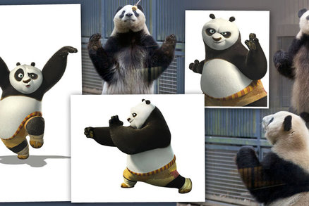 Dívejte na ty chvaty: Tohle je skutečná Kung Fu Panda!