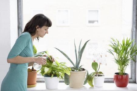 Pokojové rostliny dokážou doma i v kanceláři  vstřebat mnoho škodlivin