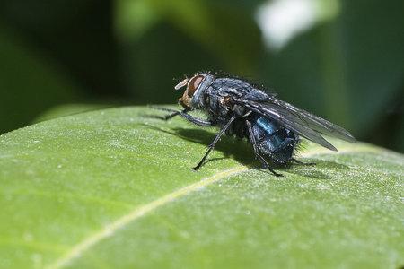 Některé děti vyloženě šílí, když vidí mouchu nebo motýla.