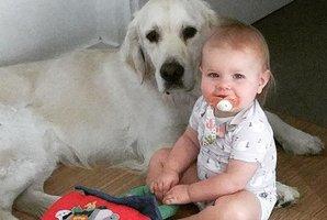 Rodiče nemohli uvěřit svým očím! Dva psi pomohli batoleti utéci z postýlky