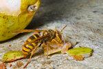 Zničte je! Nenechte hmyzí agresory ničit úrodu