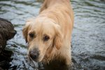 Lidská zrůda přelezla v Halenkovicích plot a zabila rodině psa: Policie žádá o pomoc