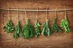 Jak využít bylinky? Vyrobte si domácí bylinný ocet, led nebo sůl!