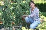 Vše o rajčatech: Jak na ně, abyste měli velkou a kvalitní úrodu?