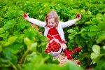 Jak se postarat o jahodníky, aby příští rok přinesly bohatou úrodu