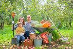 Babí léto na zahradě: Co udělat krok za krokem!