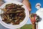 Europoslanci se hádají: Budeme jíst i v Česku hmyz a klonované maso?