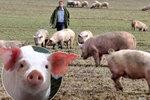 Za vepřové platíme přemrštěné ceny kvůli maržím obchodů, zuří chovatelé