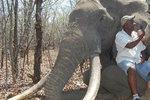 Němec zaplatil 1,5 milionu a mohl odstřelit obřího slona