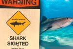 Čelisti na Havaji. Žralok pokousal v jeden den hned dva lidi
