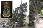 Vánoční strom ze Staromáku je pryč: Káceli ho 6 hodin, zbytky snědí sloni