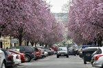 Počasí v Praze bude ryze aprílové. Jarní teploty už nás ale neopustí