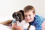 Video: Pes bránil chlapce před rodiči, když chtěli, aby vstal do školy
