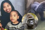 Za smrt gorily rodiče nemůžou! Prokuratura neobviní matku, jejíž dítě spadlo do výběhu