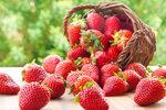 Chcete mít letos velkou sklizeň jahod? Víme, jak je nejlépe sázet