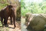 Srdceryvný snímek: Pytláci zabili a rozkuchali slona, kvůli čínské medicíně