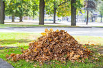 Jak se zbavit listí na zahradě? Vyzkoušejte trik, který se stal hitem internetu!