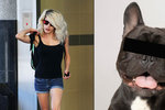 Zooblondýna se přiznala k sexu se psem, přítel ji při něm natáčel