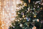 Co by to bylo za české Vánoce, kdyby doma nevonělo jehličí. Živé řezané stromky stále hrají prim, do módy ale přicházejí ty v květináčích. Víme, podle čeho stromek nakupovat a jak se o něj postarat, aby byl krásný co nejdéle.