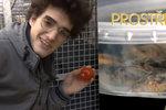 Student v Prostřeno servíroval jídlo z odpadků, co vyhrabal v popelnici!