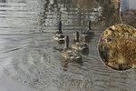 """Stovky zvířat po zimě putují zpět do přírody: Ježka vám záchranná stanice """"dá domů"""""""