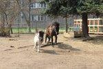 Projížďky na koních i brýle navozující opilost: Praha 21 oslaví Den Země stylově