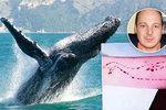 Panika, labilní osobnost a diskuse: Jak může Modrá velryba dohnat dítě k sebevraždě