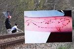 Na přednášku o Modré velrybě za 3000,- se stojí fronty. Řeší, zda je hra reálná, či ne