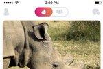 Poslední nosorožec tuponosý z Česka je svůdník. Má profil na Tinderu